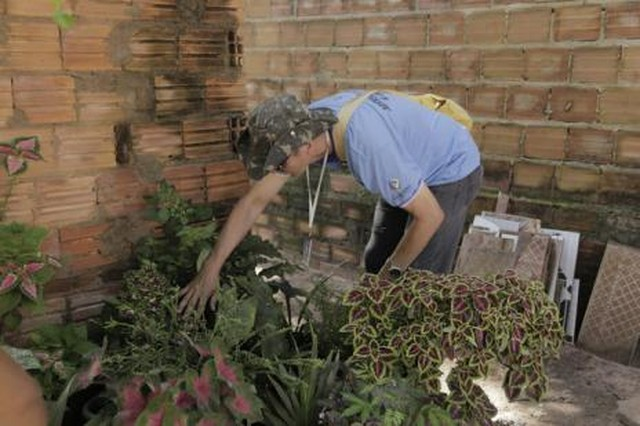Araguaína registra aumento de 472% em casos de dengue com probabilidade de morte