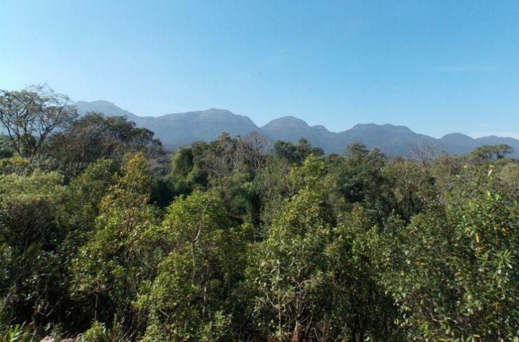 Composto de plantas da Mata Atlântica combatem Leishmaniose e Chagas